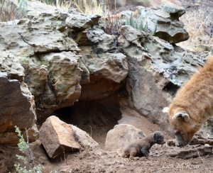 Spotted Hyena and her cub