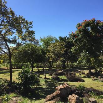 Colleen's Garden