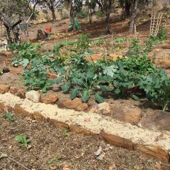 Colleen's Vegetable Garden