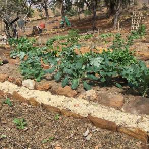 Colleen's Vegetable Garden