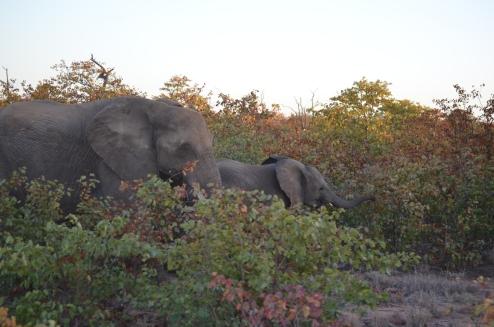 Breakfast Elephants