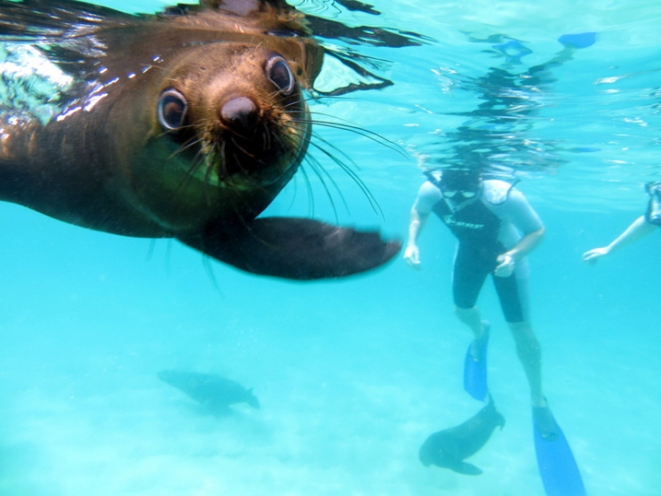 Offshore Seal-Human Interaction